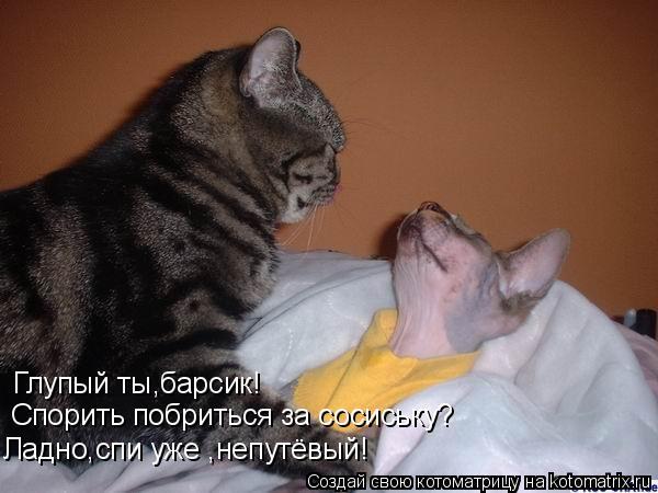 Котоматрица: Глупый ты,барсик!  Спорить побриться за сосиську? Ладно,спи уже ,непутёвый!
