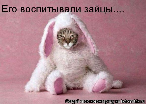 Котоматрица: Его воспитывали зайцы....