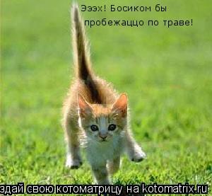 Котоматрица: Эээх! Босиком бы  пробежаццо по траве!