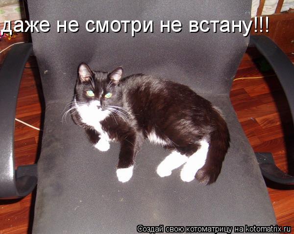 Котоматрица: даже не смотри не встану!!!