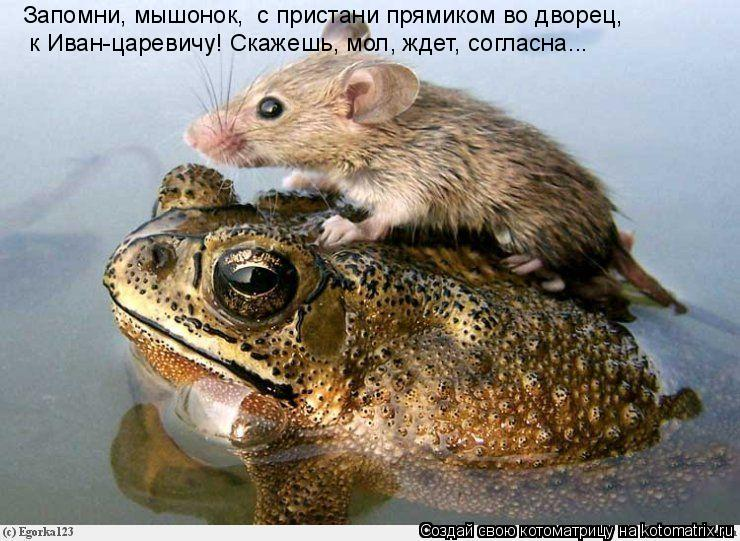 Котоматрица: Запомни, мышонок,  с пристани прямиком во дворец,  к Иван-царевичу! Скажешь, мол, ждет, согласна...