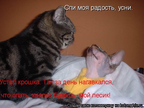 Котоматрица: Спи моя радость, усни. Устал крошка. Так за день нагавкался, что спать  крепко будешь, мой песик!