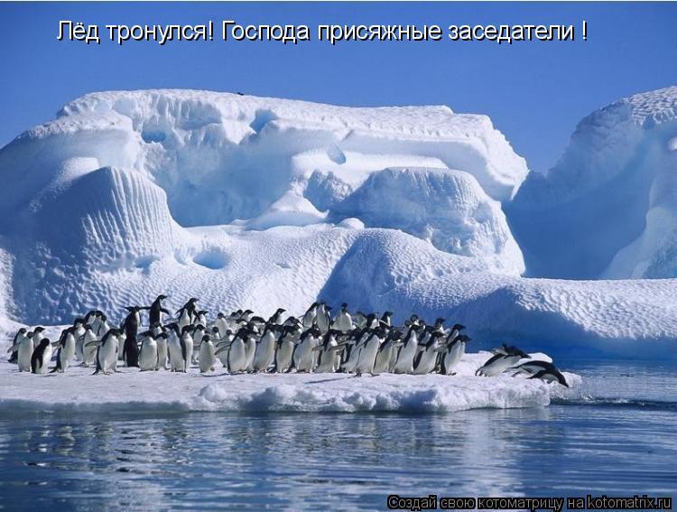 Котоматрица: Лёд тронулся! Господа присяжные заседатели !