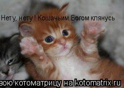 Котоматрица: Нету, нету ! Кошачьим Богом клянусь