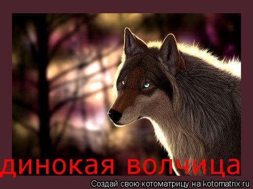 Котоматрица: динокая волчица