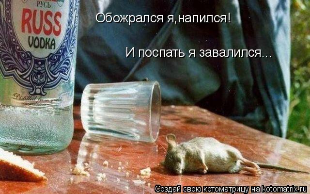 Котоматрица: Обожрался я,напился! И поспать я завалился...