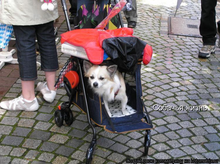 Котоматрица: Собачья жизнь