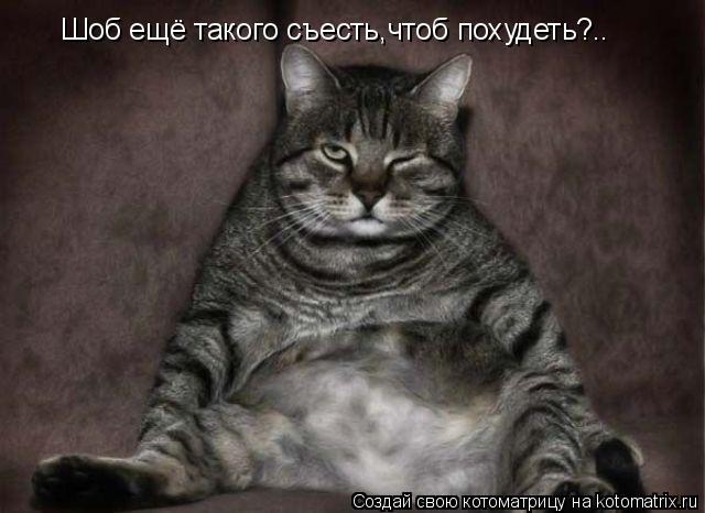 Котоматрица: Шоб ещё такого съесть,чтоб похудеть?..