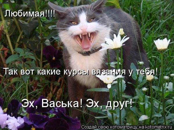 Котоматрица: Любимая!!!! Так вот какие курсы вязания у тебя! Эх, Васька! Эх, друг!
