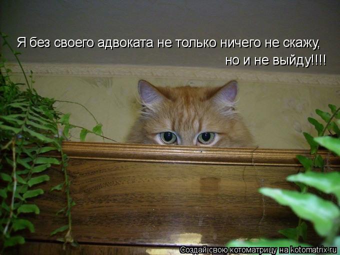 Котоматрица: Я без своего адвоката не только ничего не скажу,  но и не выйду!!!!