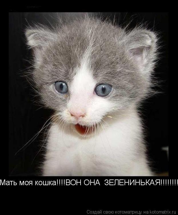 Котоматрица: Мать моя кошка!!!!ВОН ОНА  ЗЕЛЕНИНЬКАЯ!!!!!!!!