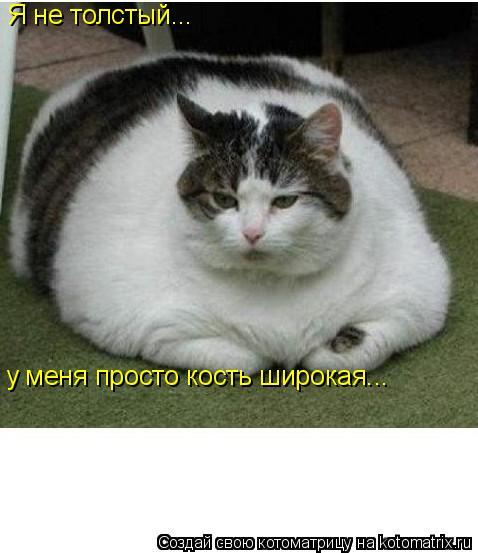 Котоматрица: Я не толстый...  у меня просто кость широкая...