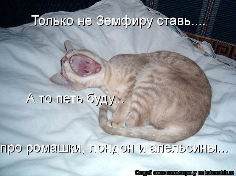 Котоматрица: Только не Земфиру ставь.... А то петь буду... про ромашки, лондон и апельсины...