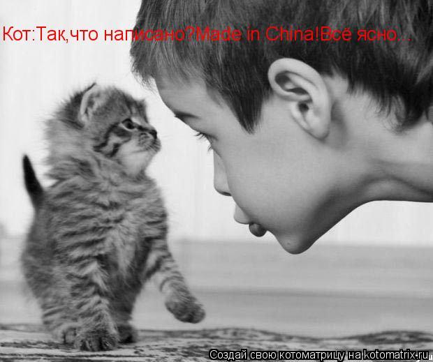 Котоматрица: Кот:Так,что написано?Made in China!Всё ясно...