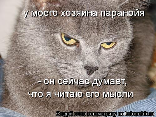 Котоматрица: у моего хозяина паранойя - он сейчас думает, что я читаю его мысли