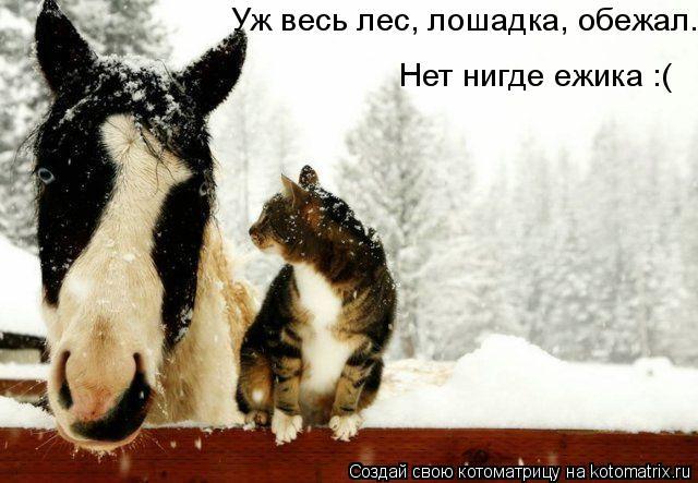 Котоматрица: Уж весь лес, лошадка, обежал. Нет нигде ежика :(