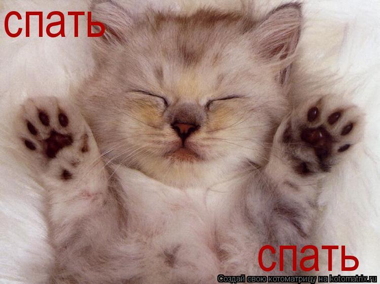 Котоматрица: спать спать