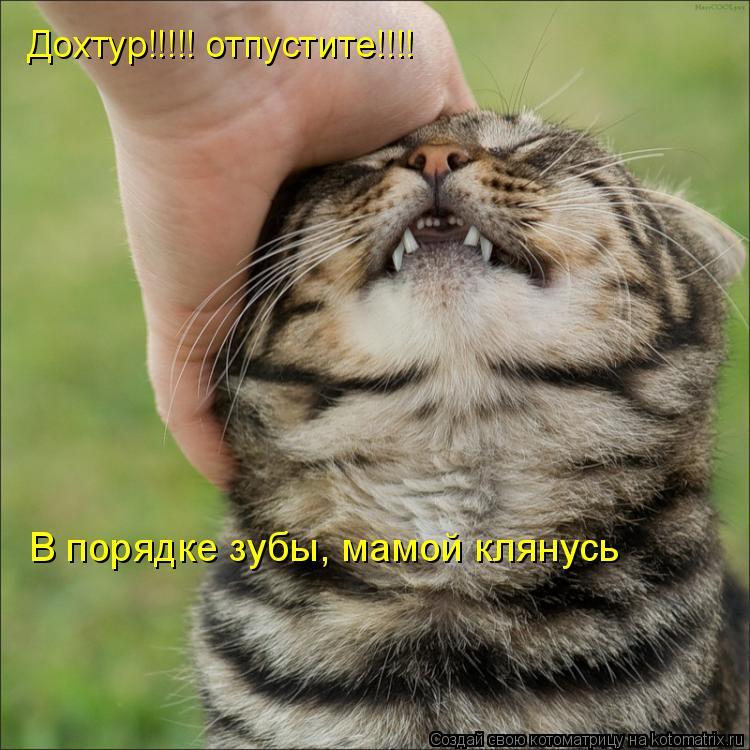 Котоматрица: В порядке зубы, мамой клянусь Дохтур!!!!! отпустите!!!!