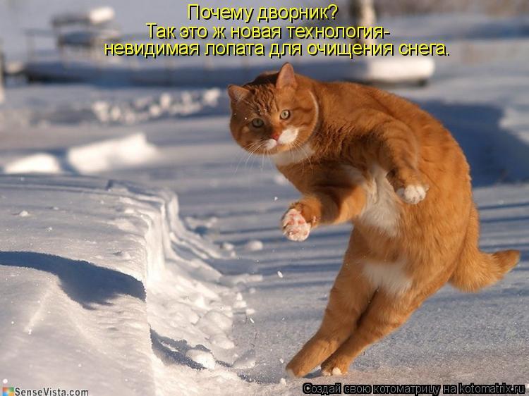Котоматрица: Почему дворник? Так это ж новая технология- невидимая лопата для очищения снега.