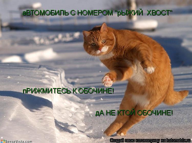 """Котоматрица: аВТОМОБИЛЬ С НОМЕРОМ """"рЫЖИЙ  ХВОСТ""""  пРИЖМИТЕСЬ К ОБОЧИНЕ!  дА НЕ КТОЙ ОБОЧИНЕ!"""