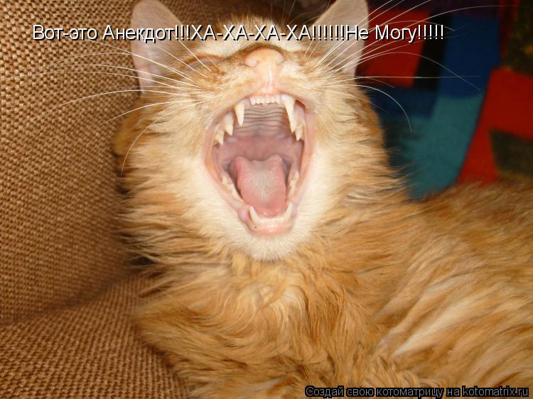Котоматрица: Вот-это Анекдот!!!ХА-ХА-ХА-ХА!!!!!!Не Могу!!!!!