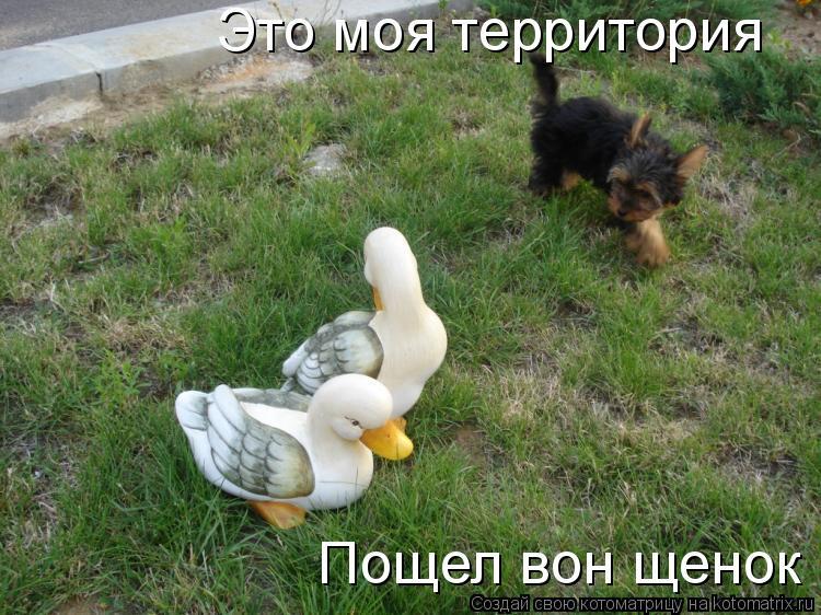 Котоматрица: Это моя территория  Пощел вон щенок