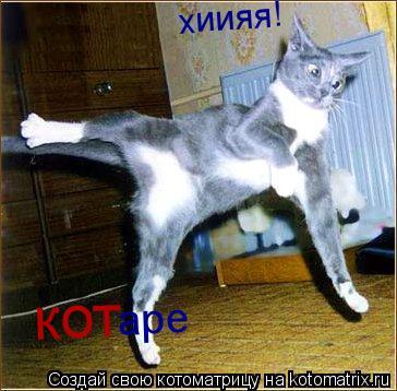 Котоматрица: хиияя! кот аре