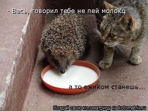 Котоматрица: - Вась, говорил тебе не пей молоко , а то ежиком станешь...