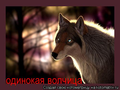 Котоматрица: одинокая волчица