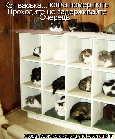 Котоматрица: Кот васька... полка номер пять Проходите не задерживайте Очередь