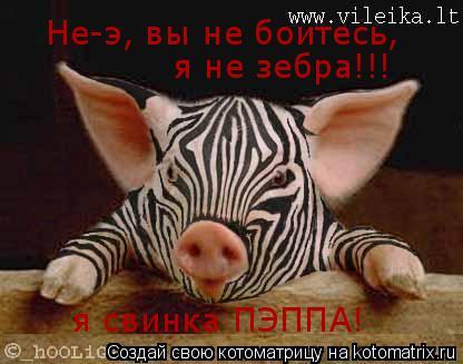 Котоматрица: Не-э, вы не боитесь, я не зебра!!! я свинка ПЭППА!