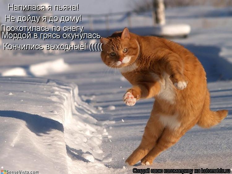 Котоматрица: Напилася я пьяна! Не дойду я до дому! Прокотилась по снегу, Мордой в грясь окунулась. Кончились выходные! (((((
