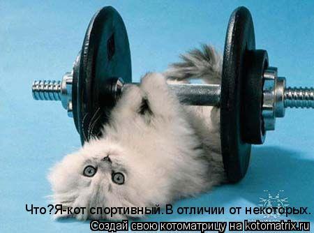 Котоматрица: Что?Я-кот спортивный.В отличии от некоторых.