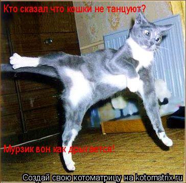 Котоматрица: Кто сказал что кошки не танцуют? Мурзик вон как дрыгается!