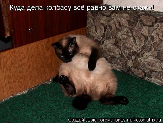 Котоматрица: Куда дела колбасу всё равно вам не скажу!