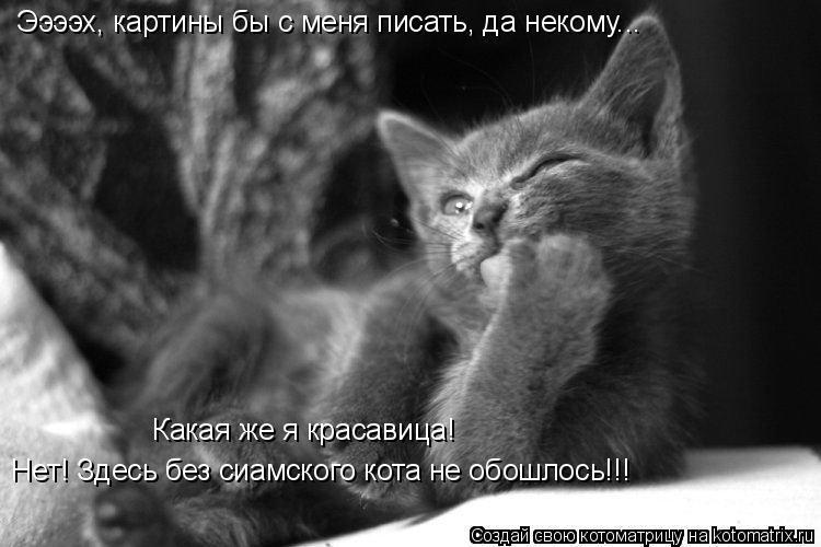 Котоматрица: Нет! Здесь без сиамского кота не обошлось!!!   Какая же я красавица!