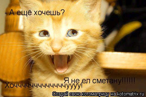 Котоматрица: Я не ел сметану!!!!!!   - А ещё хочешь? Хочччччччччччччуууу!