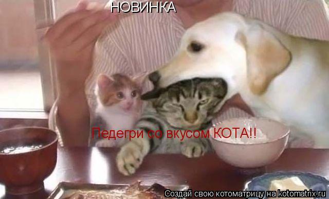 Котоматрица: НОВИНКА Педегри со вкусом КОТА!!