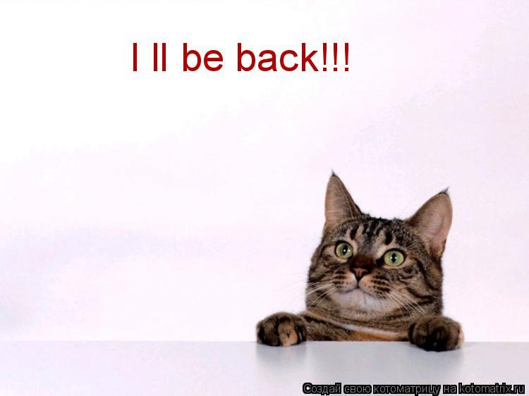 Котоматрица: I ll be back!!!