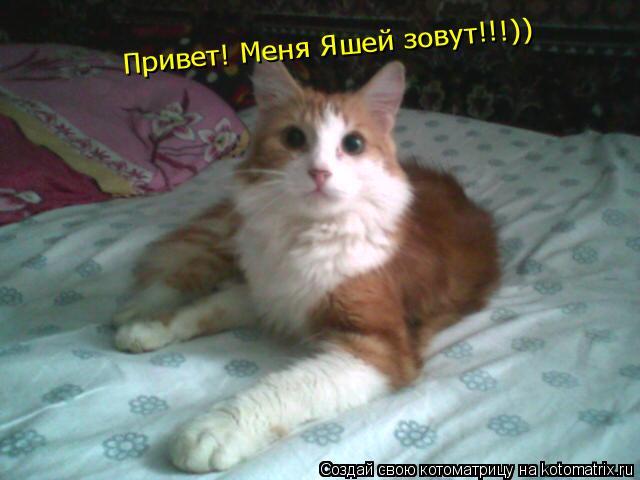 Котоматрица: Привет! Меня Яшей зовут!!!))