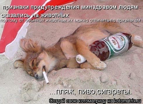 Котоматрица: ...пляж, пиво,сигареты. признаки придупреждения минздравом людям сказались на животных поэтому от обычных животных их можно отличить по при