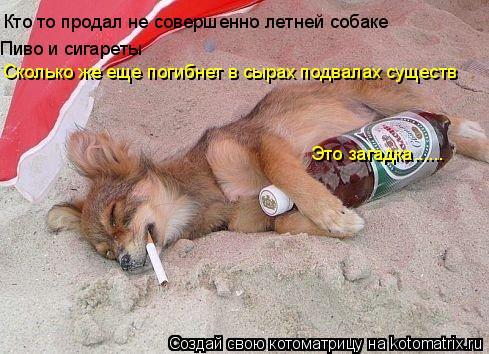 Котоматрица: Кто то продал не совершенно летней собаке   Пиво и сигареты Сколько же еще погибнет в сырах подвалах существ Это загадка......
