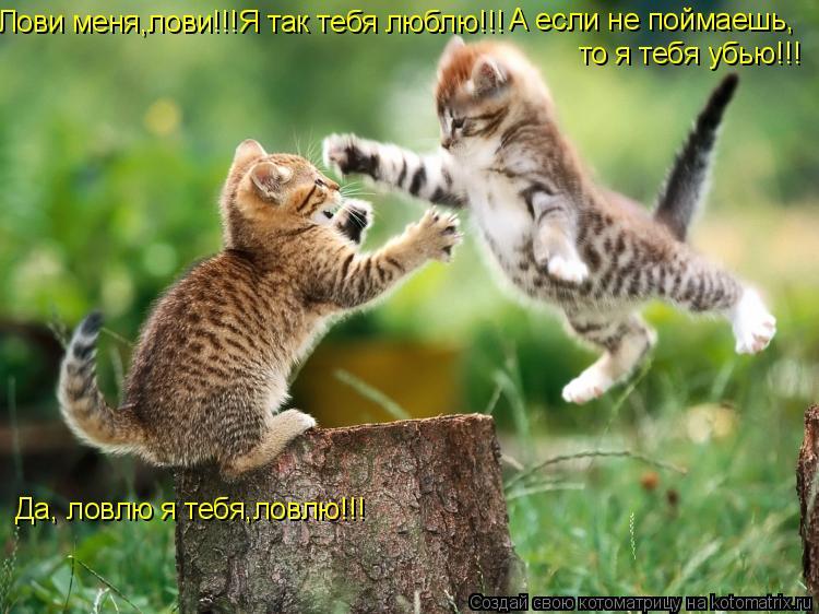 Котоматрица: А если не поймаешь, Да, ловлю я тебя,ловлю!!! то я тебя убью!!! Лови меня,лови!!!Я так тебя люблю!!!