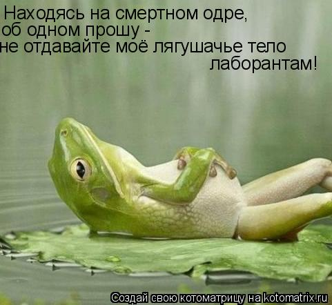 Котоматрица: Находясь на смертном одре, об одном прошу -  не отдавайте моё лягушачье тело лаборантам!
