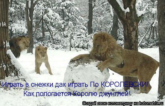 Котоматрица: Играть в снежки дак играть По КОРОЛЕВСКИ!  Как пологается Королю джунглей!