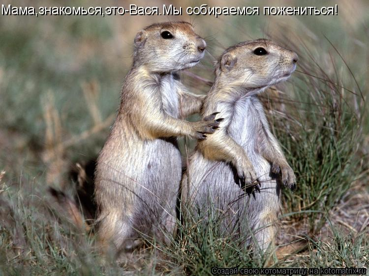 Котоматрица: Мама,знакомься,это-Вася.Мы собираемся пожениться!