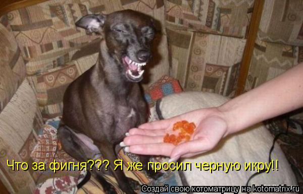 Котоматрица: Что за фигня??? Я же просил черную икру!!