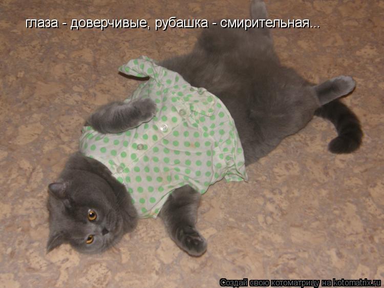 Котоматрица: глаза - доверчивые, рубашка - смирительная...