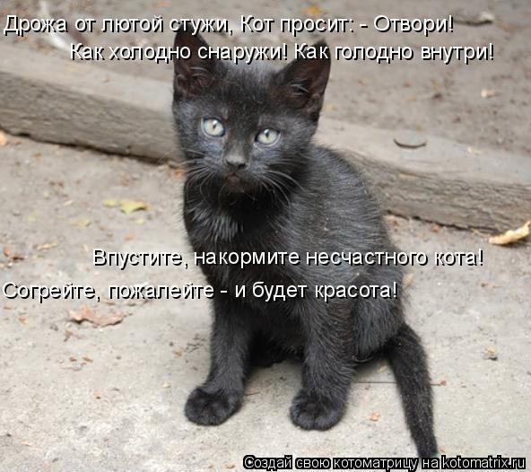Котоматрица: Дрожа от лютой стужи, Кот просит: - Отвори!  Как холодно снаружи! Как голодно внутри!  Впустите, накормите несчастного кота!  Согрейте, пожалей