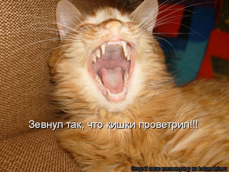 Котоматрица: Зевнул так, что кишки проветрил!!!